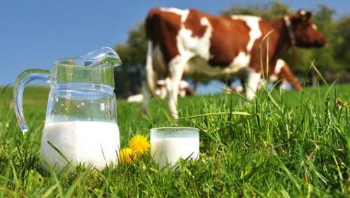 lactate bio